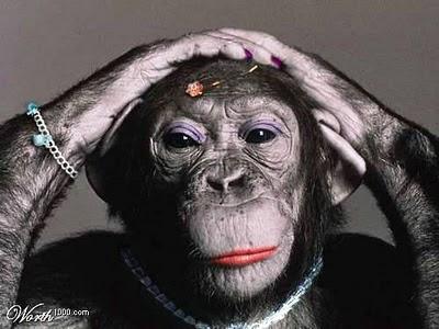 Az állatokon való kísérletezés nem ezt jelenti...